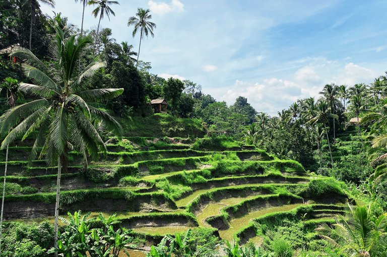 View of the rice terraces in Tegallalang, Bali