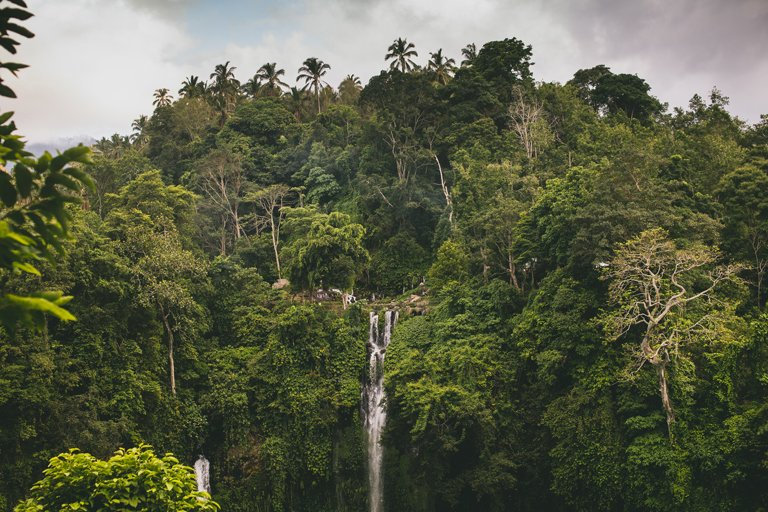 Sekumpul waterfall in the middle of the vegetation, Bali