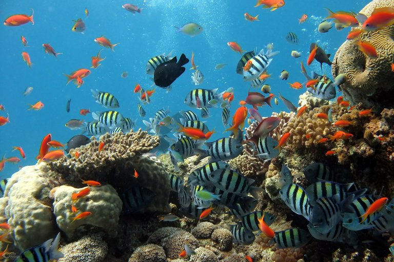 Fishes around a coral reef in Bali