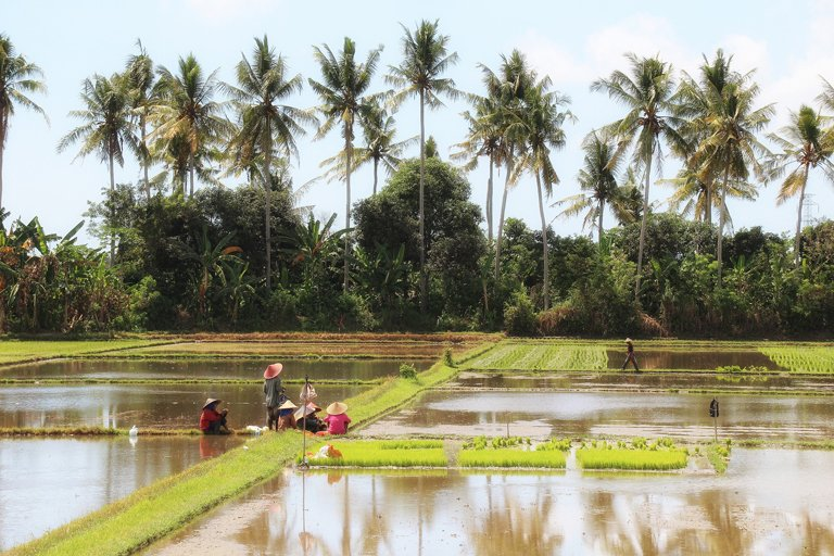 Subak irrigation system for rice fields in Bali